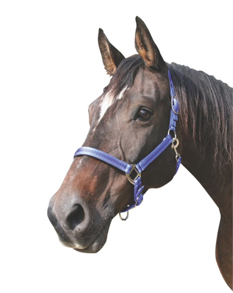 Image of Kerbl Adjustable Head Collar Royal Blue & Black