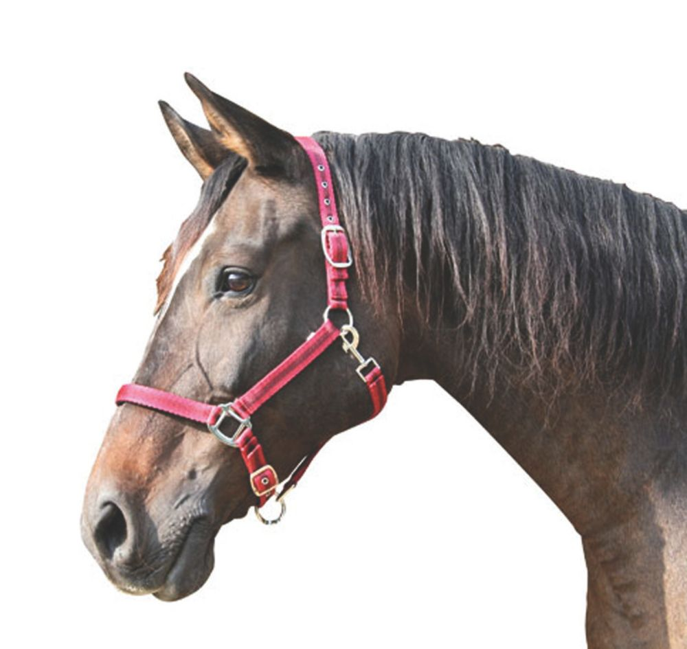 Image of Kerbl Adjustable Head Collar Red & Black