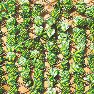 Image of Apollo Willow Watermelon Leaf Roll-Up Trellis 2 x 1m